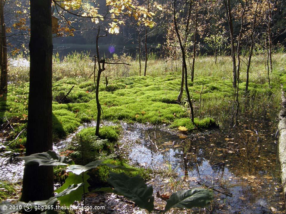 Autumn light over moss