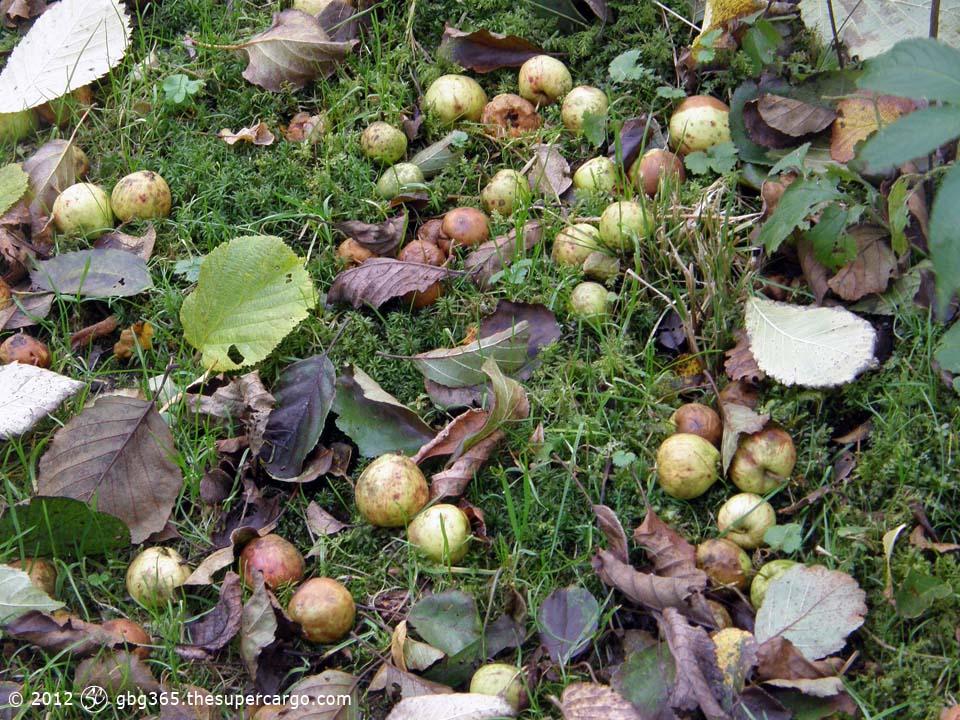 Fallen crab-apples