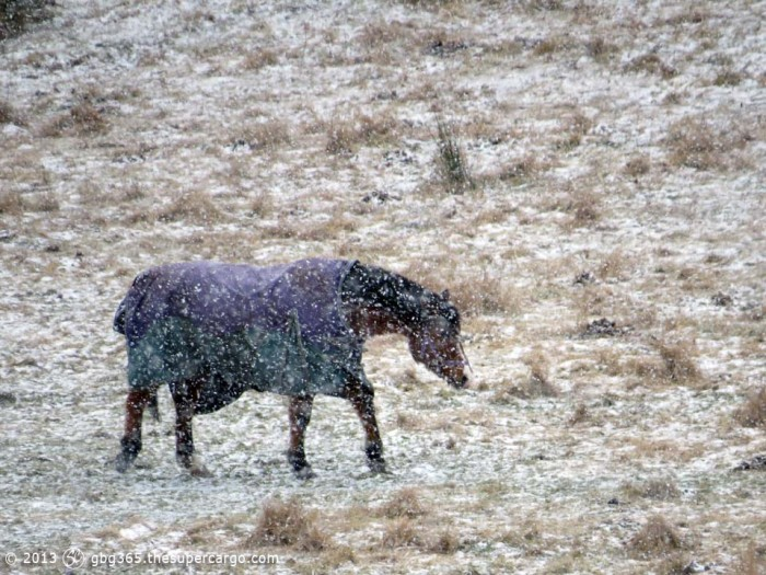 Horse in snow