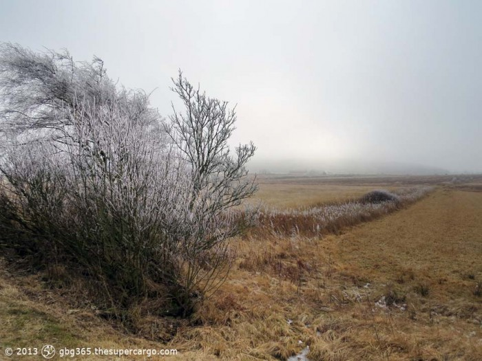 Frosted hedgerow