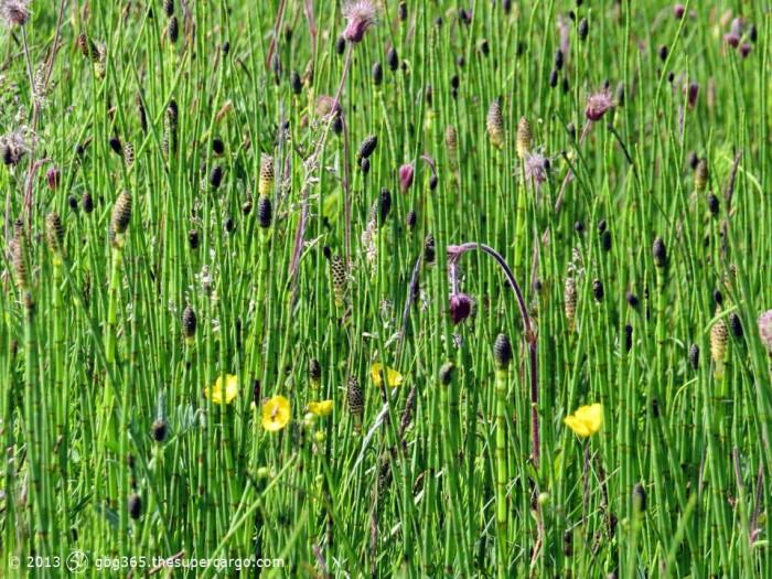 Wetland green