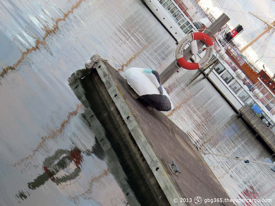 Sleeping eider