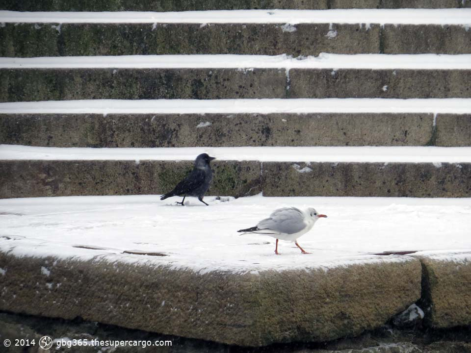 Birds on snowy steps