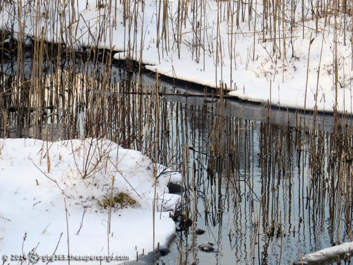 Reeds, water, ice