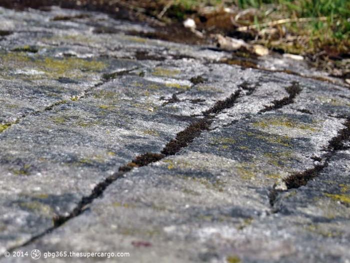 Lichen and striations