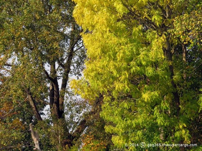 Early autumn colours - Medicinaregatan