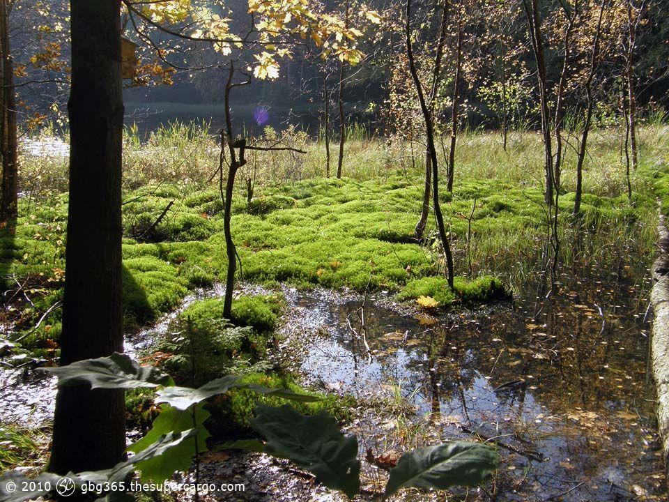 autumn-light-over-moss.jpg