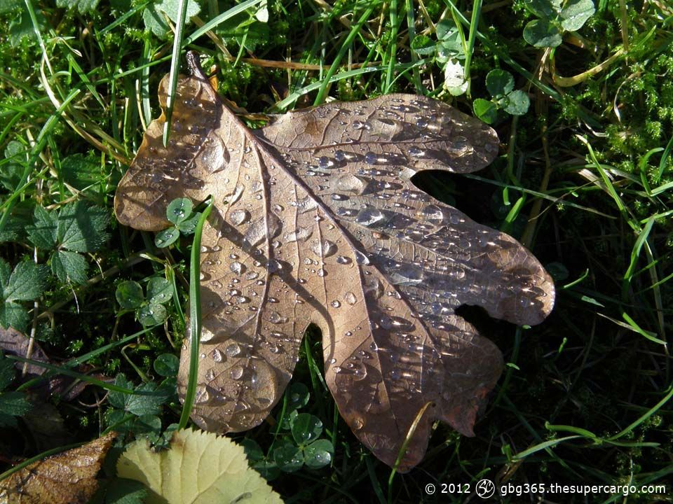 water-drops-on-oak-leaf.jpg