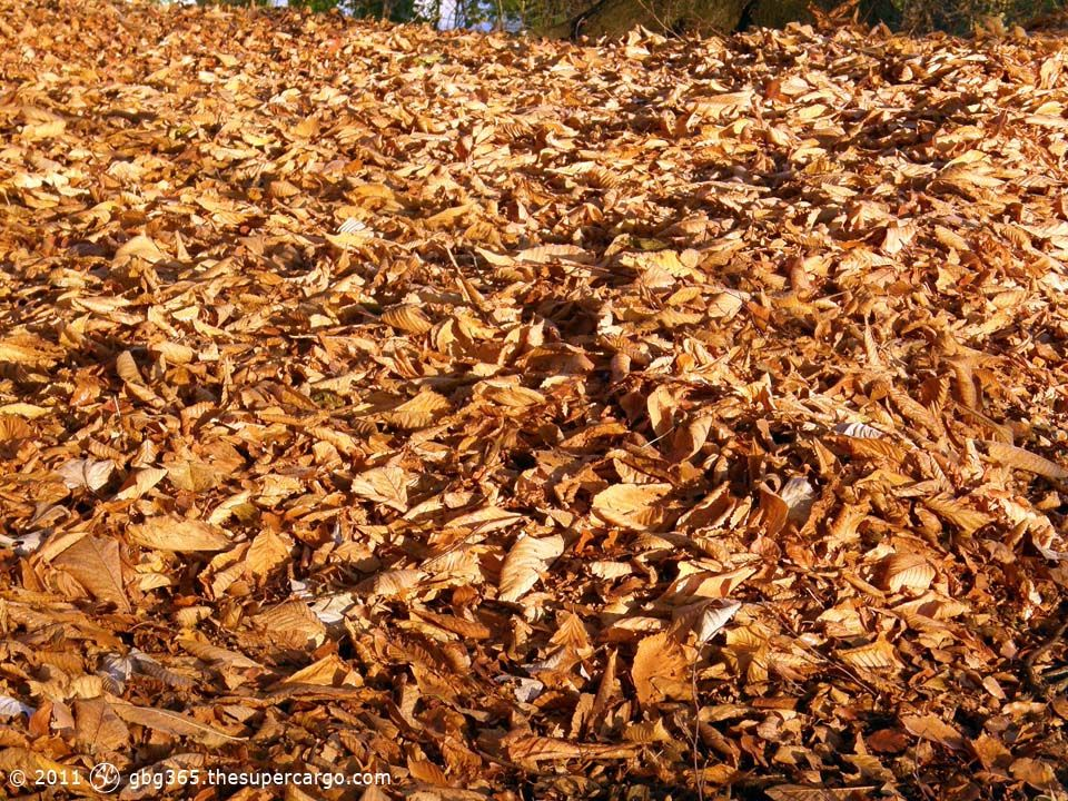 drift-of-autumn-leaves.jpg