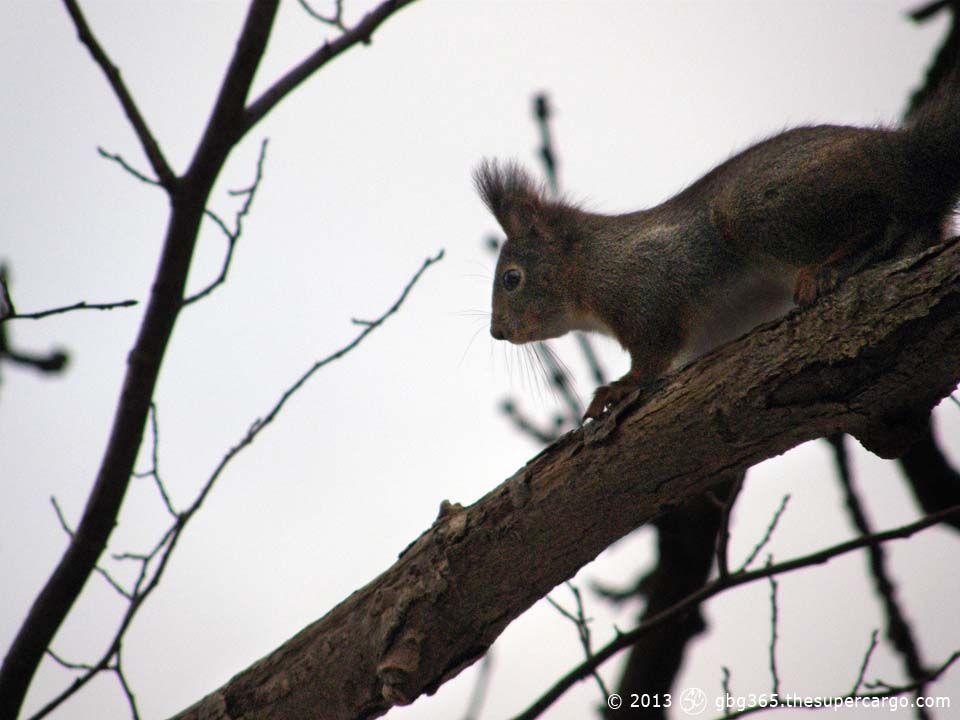 curious-squirrel.jpg