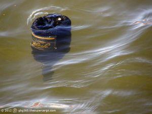 A Friexinet float