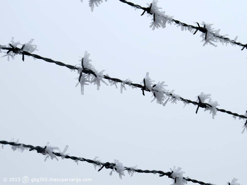 barbed-frost.jpg