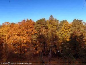Autumn trees touched by the sun