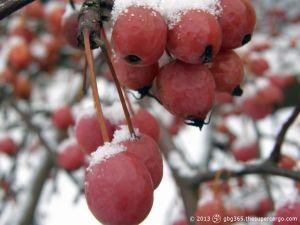 frozen-red.jpg
