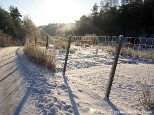 The sun on a snowy path